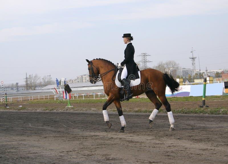 Menina em um cavalo imagem de stock royalty free