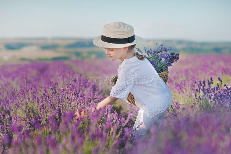Menina em um chapéu de palha em um campo da alfazema com uma cesta da alfazema Uma menina em um campo da alfazema Menina com um r fotografia de stock