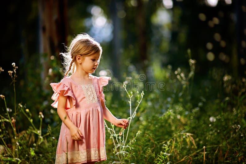 A menina em um vestido cor-de-rosa que funde um ramalhete dos dentes-de-leão fotografia de stock