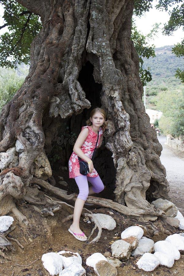 Menina em uma oliveira grande fotos de stock royalty free
