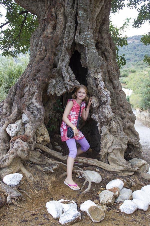 Menina em uma oliveira grande imagens de stock royalty free