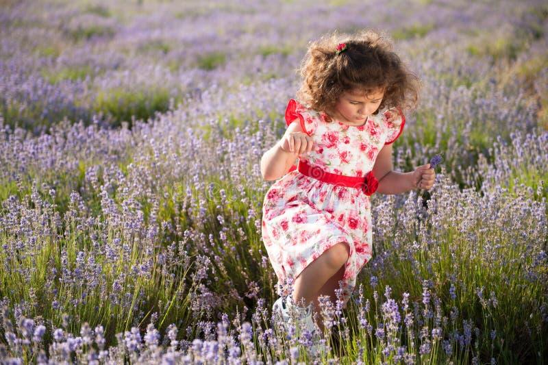 Menina encaracolado pequena considerável no vestido na moda do verão que anda entre o campo da alfazema fotografia de stock