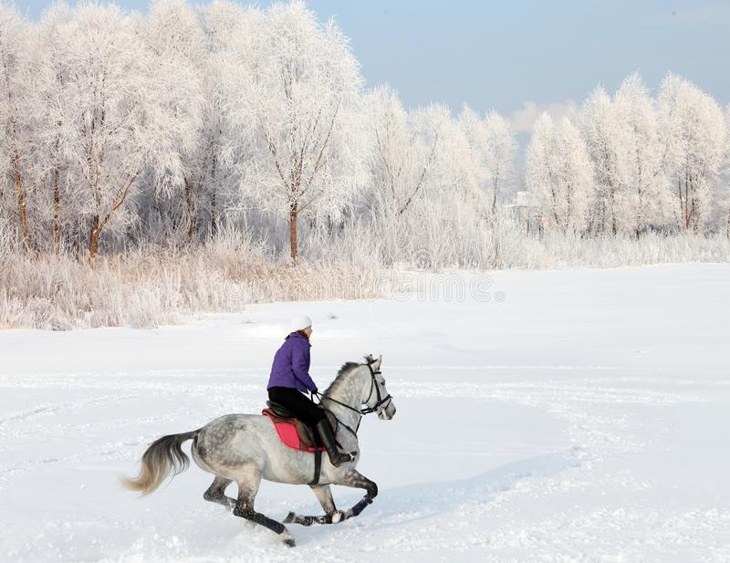 Menina equestre bonita que monta seu cavalo preto através da neve fora imagens de stock
