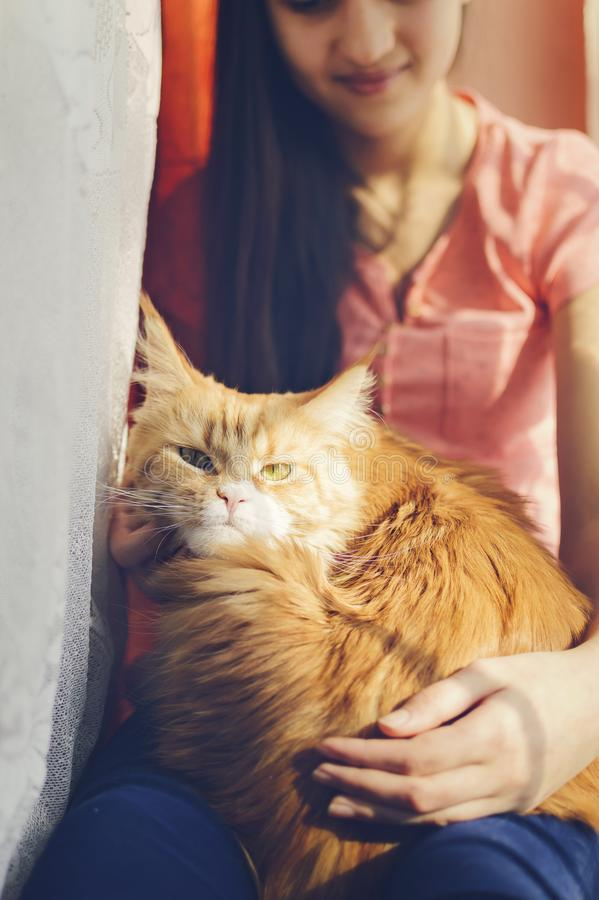 A menina está guardando um gato vermelho em seus braços imagem de stock royalty free