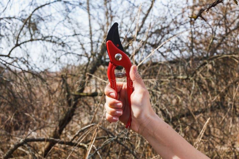 A menina est? guardando uma tesoura de podar manual vermelha no jardim imagens de stock