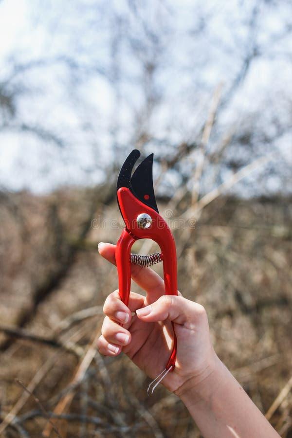 A menina est? guardando uma tesoura de podar manual vermelha no jardim imagem de stock royalty free