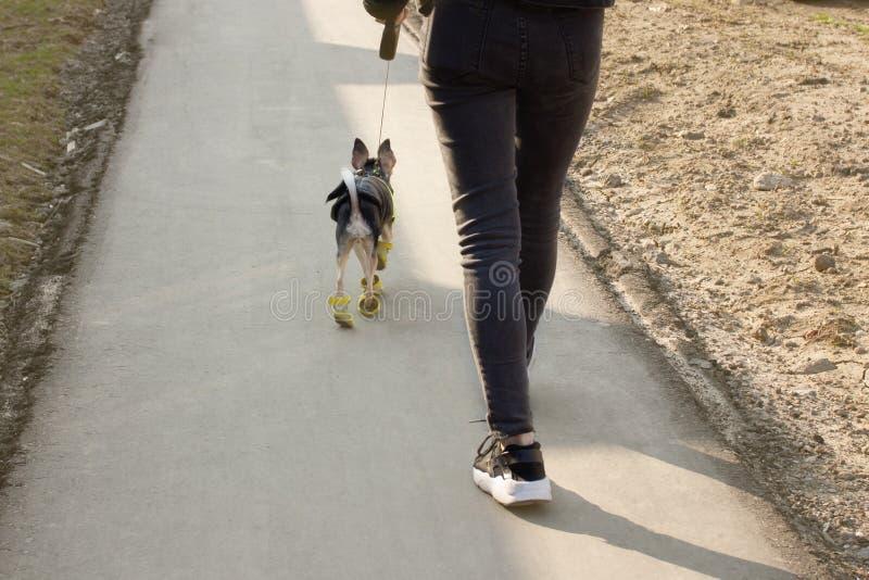 A menina europeia moderna nova anda com um cão pequeno foto de stock