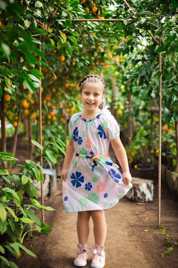 Menina feliz pequena bonita no vestido colorido no jardim Lemonarium do limão que escolhe limões maduros frescos em sua cesta imagens de stock