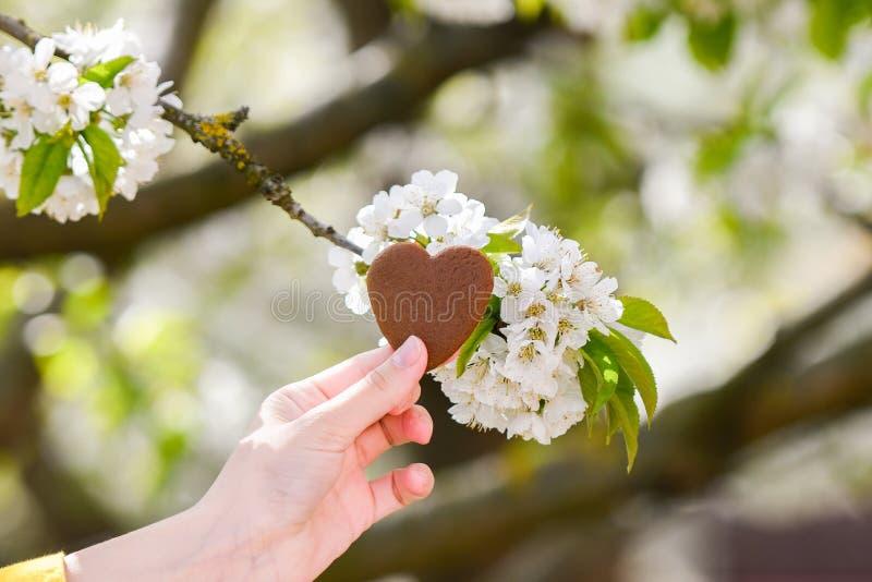 A menina guarda o coração em suas mãos Cora??o ? disposi??o Conceito da doação saudável, do amor, do órgão, do doador, da esperan imagens de stock