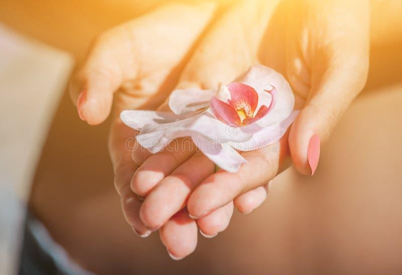 a menina guarda o phalaenopsis cor-de-rosa, bonito da flor da orquídea fotografia de stock
