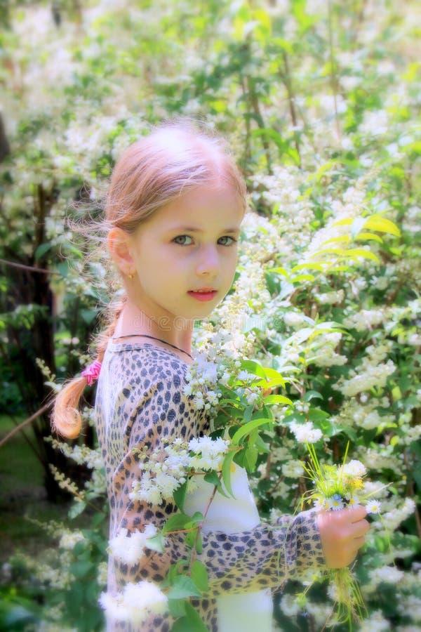 Menina loura bonita pequena e muitas flores brancas no verão foto de stock