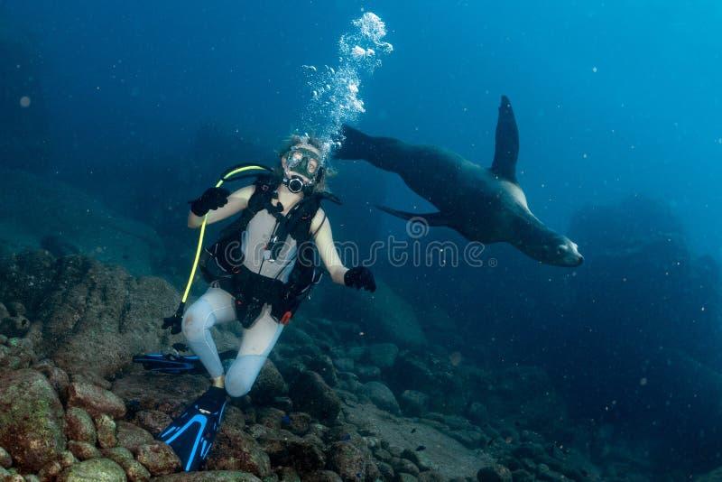 Menina loura bonita que joga com underwater do leão de mar imagens de stock royalty free