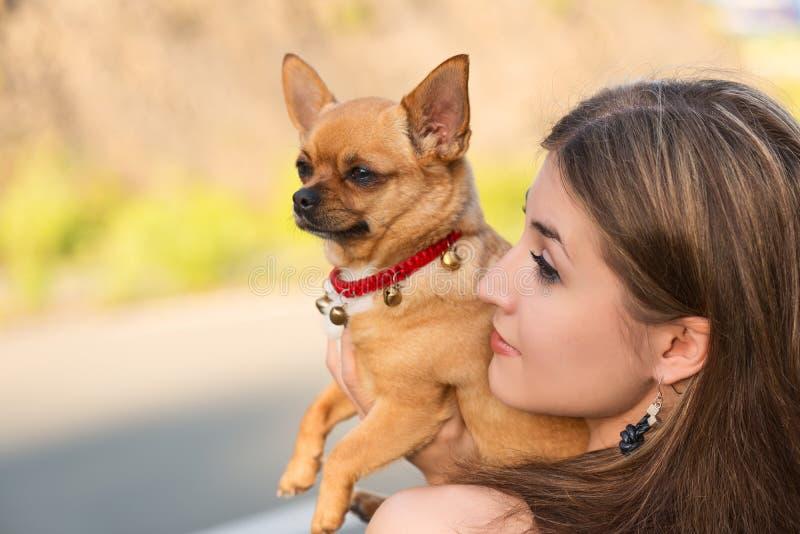 Menina loura e cão vermelho da chihuahua imagens de stock royalty free