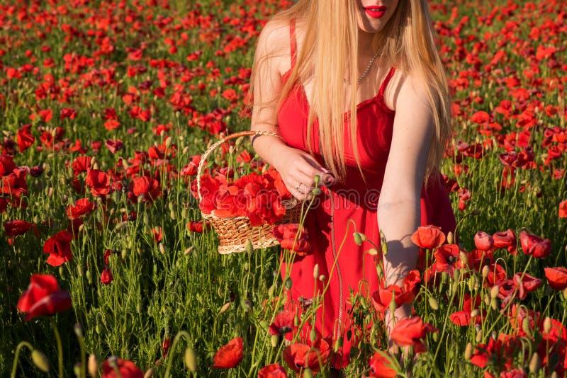 Menina loura nova bonita em um campo da papoila no por do sol imagens de stock
