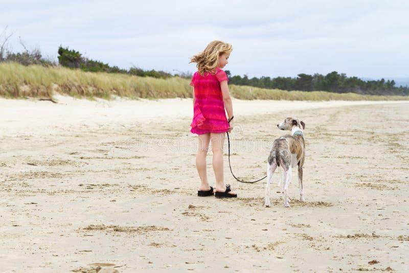 Menina loura pequena com whippet na praia fotografia de stock royalty free