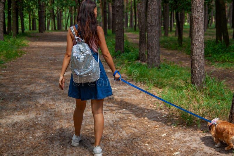 Menina na bicicleta com o cão que anda em um parque com o fundo da grama do relvado exterior imagem de stock