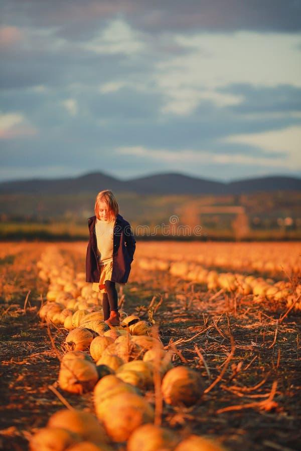 Menina na obscuridade - o revestimento azul e a saia alaranjada estão em abóboras no campo no por do sol Halloween Paisagem bonit fotografia de stock royalty free