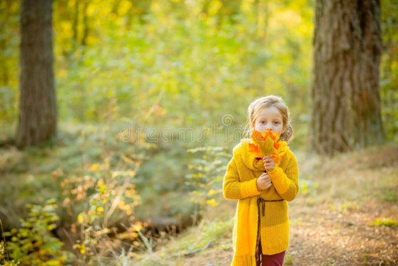 Menina nas folhas da terra arrendada do outono A menina no revestimento feito malha amarelo no parque do outono A menina nas mãos imagens de stock