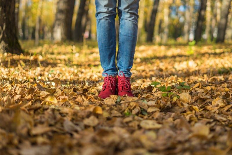 Menina nas sapatas vermelhas que estão nas folhas caídas imagens de stock