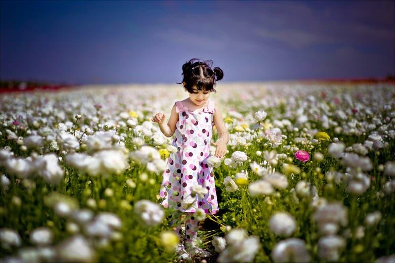 Menina no campo de flor foto de stock royalty free