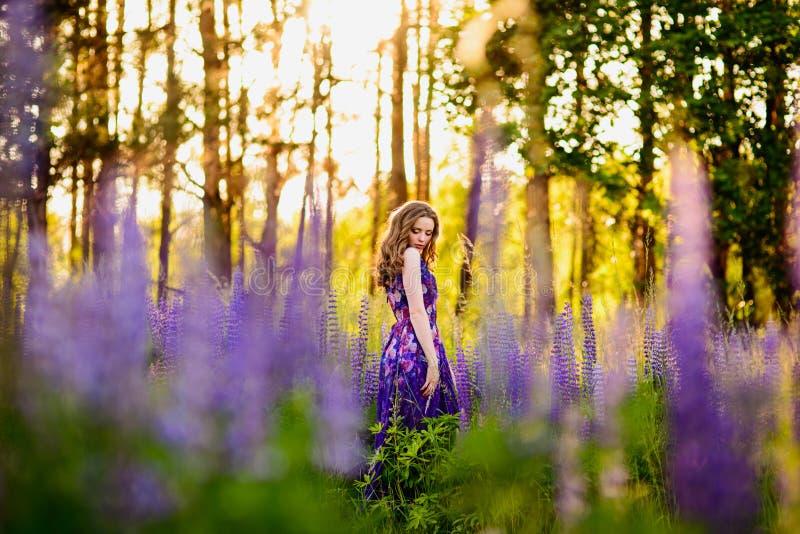Menina no campo de wildflowers roxos, por do sol no dia ensolarado foto de stock