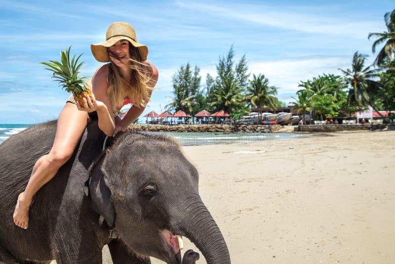 A menina no elefante na praia imagem de stock royalty free