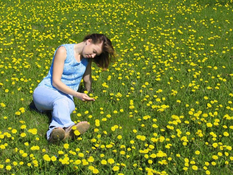 Menina no gramado do dente-de-leão imagem de stock