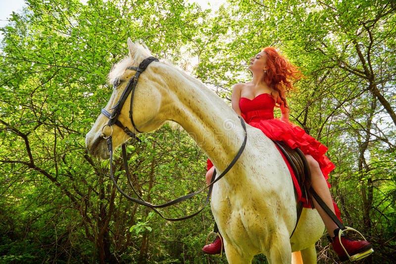 Menina no vestido vermelho bonito no cavalo branco em modelos e em forma da sessão fotográfica do parque ou da floresta fotos de stock royalty free