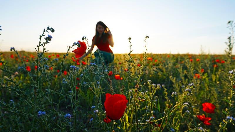 Menina nos campos da papoila Flores vermelhas com hastes verdes, campos enormes Raias brilhantes do sol fotografia de stock royalty free
