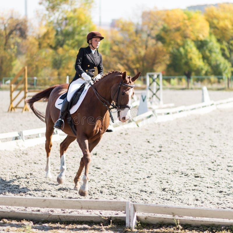 Menina nova do cavaleiro do cavalo na competição do adestramento fotografia de stock
