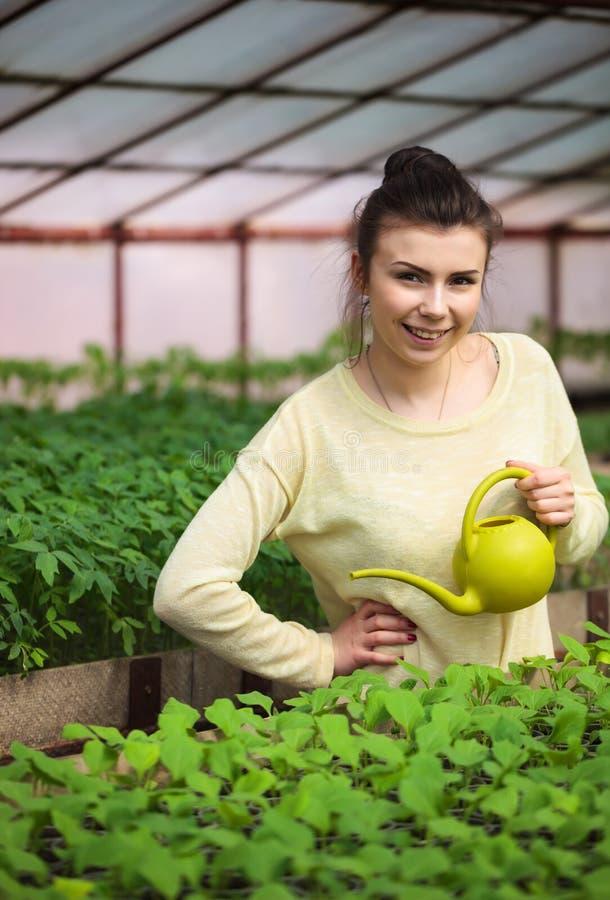 Menina nova do fazendeiro que molha plântulas verdes na estufa foto de stock royalty free