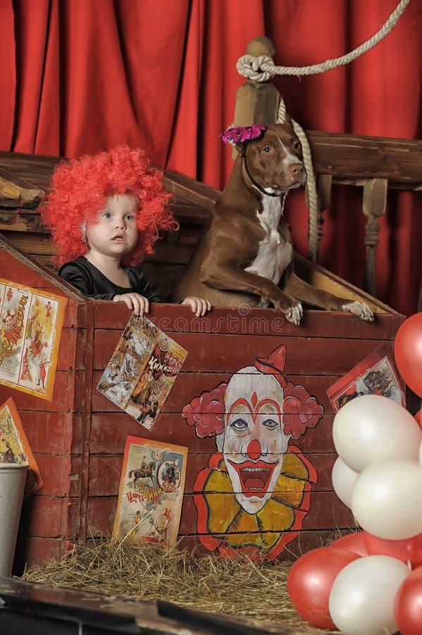 A menina o palhaço e o cão treinado no circo foto de stock