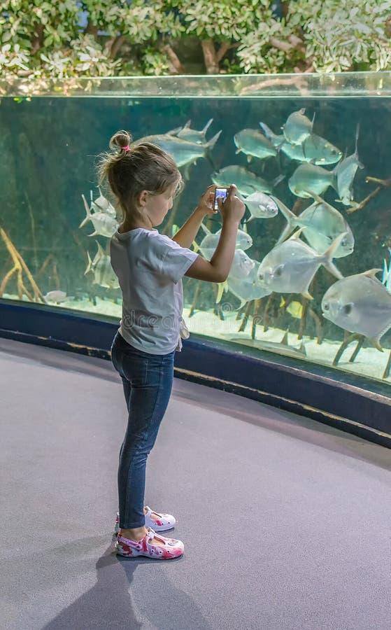 A menina olha o aquário e toma imagens de peixes grandes fotos de stock