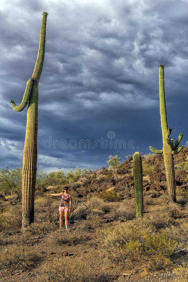 A menina olha o cacto enorme - gigante de Carnegie foto de stock