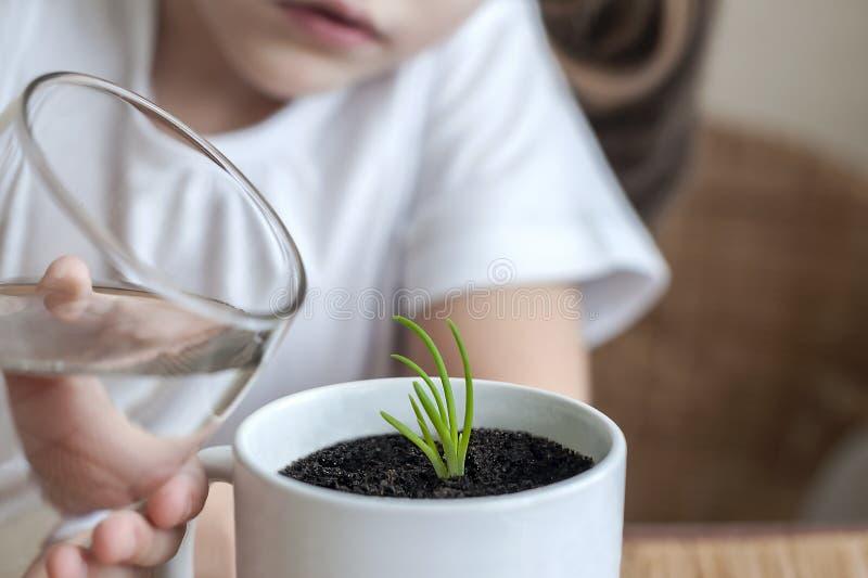 A menina pequena da criança está molhando a planta nova imagens de stock