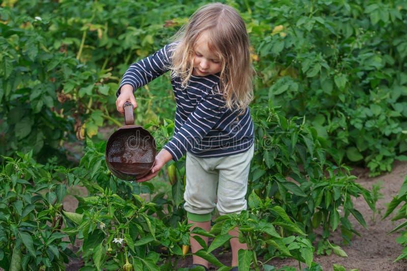 A menina pequena do jardineiro em vegetais molhando do verão trabalha imagens de stock