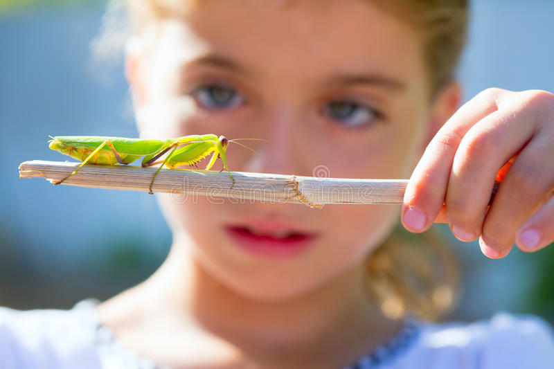 Menina pequena do miúdo que olha o mantis praying foto de stock