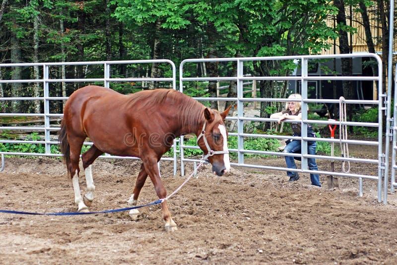 A menina presta atenção ao cavalo no anel foto de stock royalty free