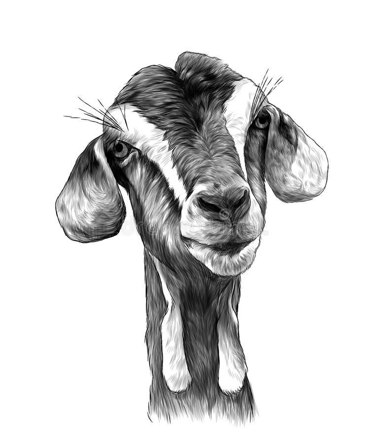 A menina principal da cabra com oscila na parte inferior do focinho ilustração stock