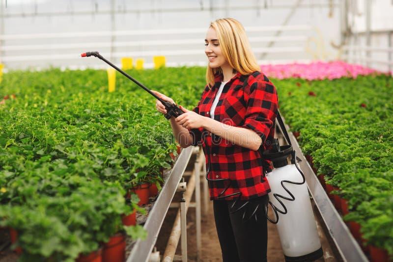 A menina pulveriza as plantas Menina que trabalha nas estufas Plantas do adubo fotografia de stock