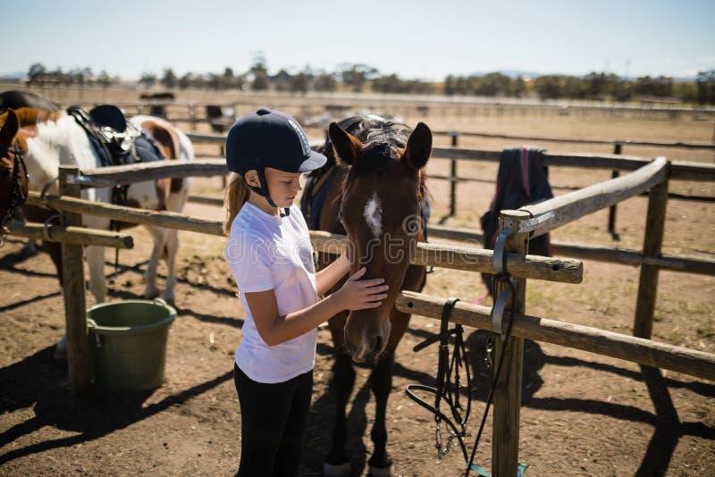 Menina que acaricia o cavalo marrom no rancho foto de stock royalty free
