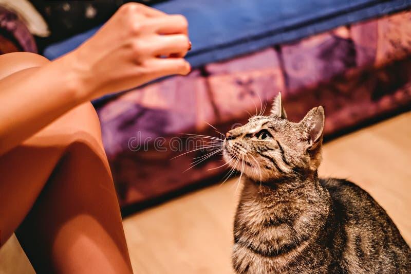 Menina que alimenta seu gato fotografia de stock