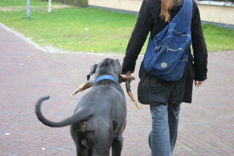 Menina que anda o cão fotografia de stock royalty free