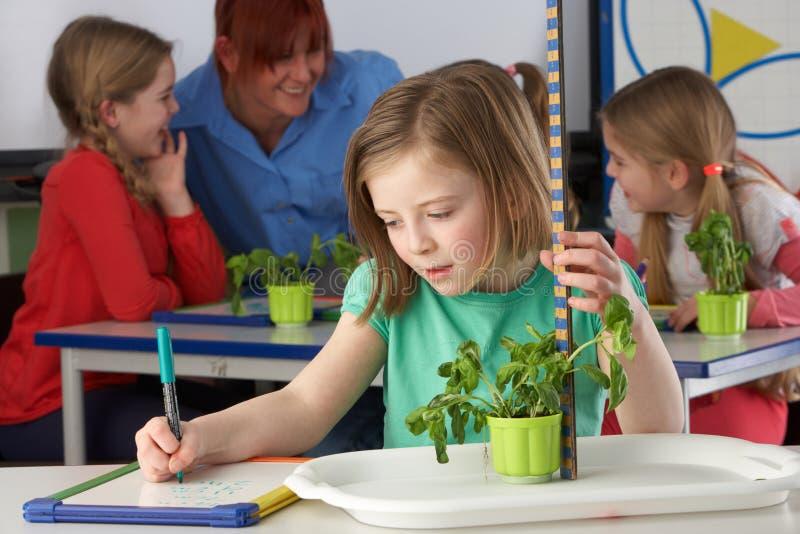 Menina que aprende sobre plantas na classe de escola imagens de stock