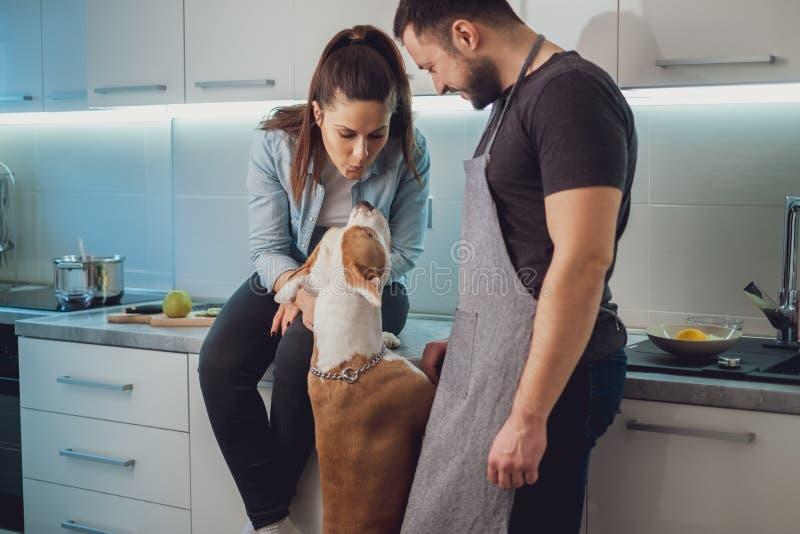Menina que beija seu cão ao sentar-se por seu noivo imagem de stock