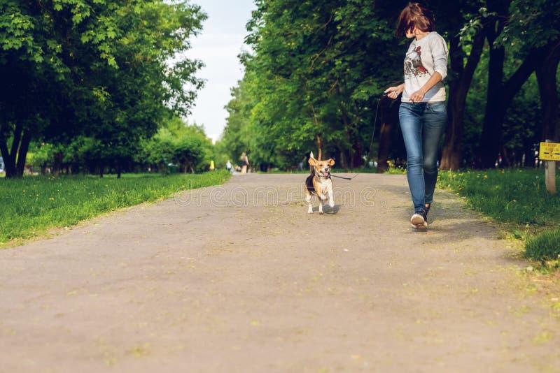 Menina que corre com seu cão fêmea bonito do lebreiro no parque em horas de verão Foto do estilo de vida fotografia de stock royalty free