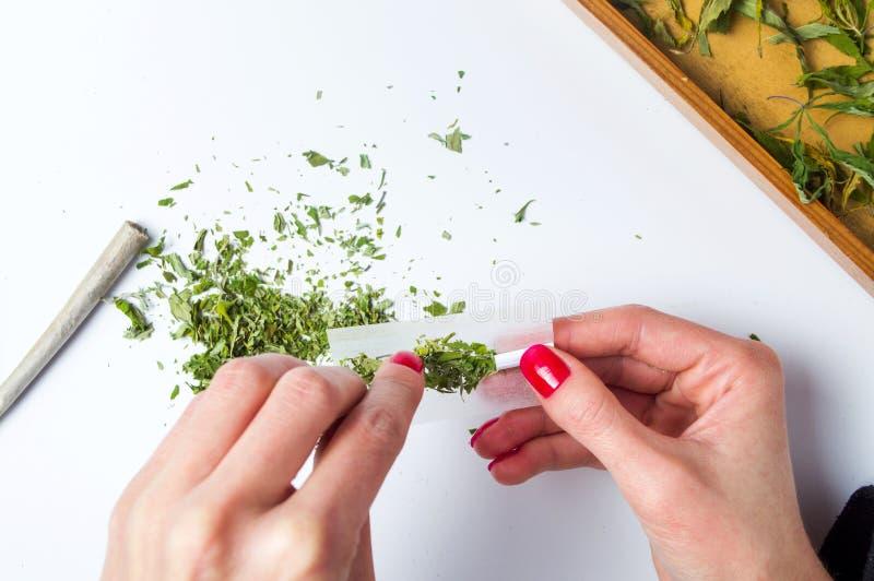 Menina que envolve a opinião superior comum da marijuana fotografia de stock