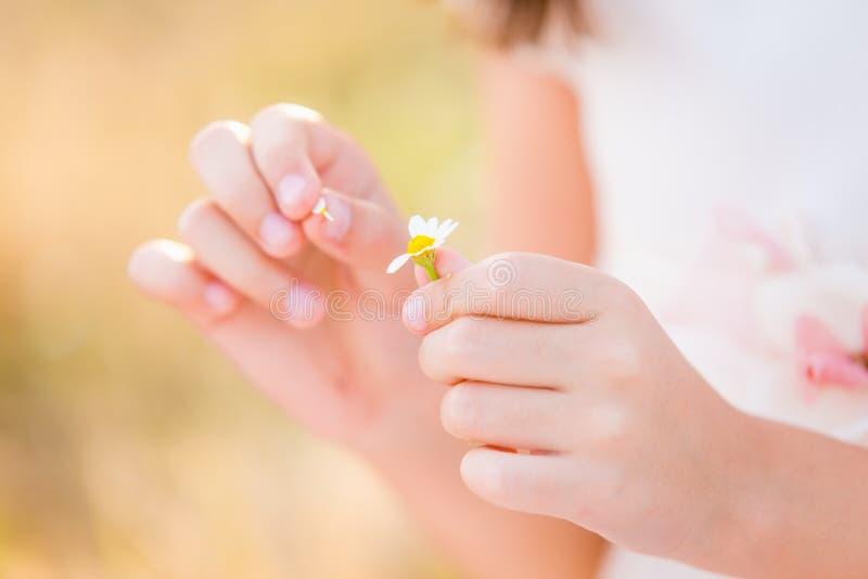 Menina que guarda a flor da margarida fotografia de stock