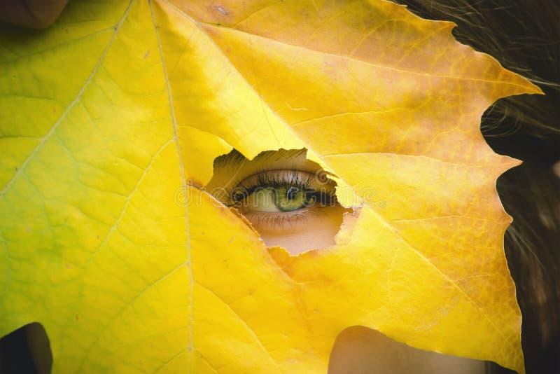 Menina que guarda a folha amarela, olhando através do fundo do outono do furo foto de stock royalty free