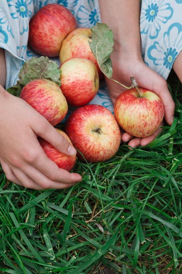 Menina que guarda maçãs na saia, sentando-se na grama foto de stock